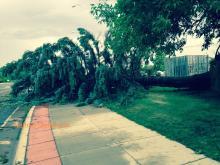 down tree by Brainerd High School